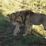 out of africa 11